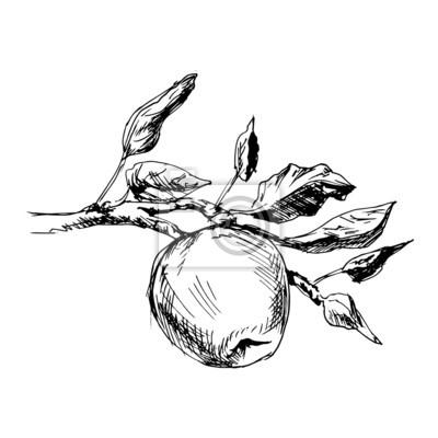 Rucni Kresba Jablko Vektorove Ilustrace Fototapeta Fototapety