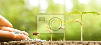 Fototapeta ruční péči o malé dítě rostliny rostoucí v klíčení pořadí na úrodnou půdu s přírodním zeleným pozadím