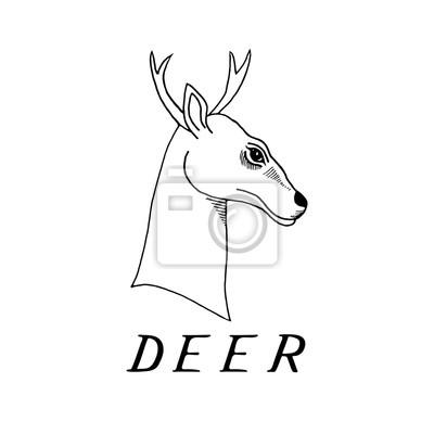 Ruka nakreslit jelení hlavu s parožím fototapeta • fototapety krásná ... 803310ff2b