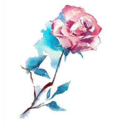 Fototapeta růže akvarel skicu. Vektorové ilustrace.