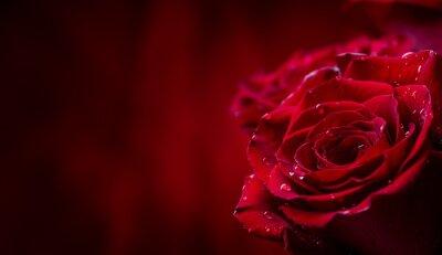 Fototapeta Růže. Červená růže. Kytici rudých růží. Valentines Day, svatební den pozadí. Okvětní lístky růží a srdce Valentine dárkové krabičky. Valentines a svatební hranic. Waters kapky na růže okvětní lístky.