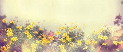Fototapeta Různé barevné jarní květiny v slunečním světle, rozostřují, poutač pro webové stránky, hraniční