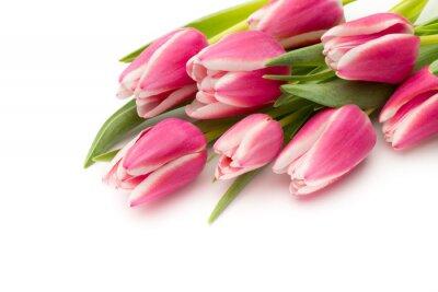Fototapeta Růžová tulipány na bílém pozadí.