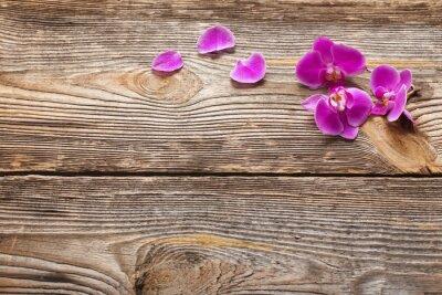 Fototapeta Růžové květy orchidejí na dřevěném pozadí