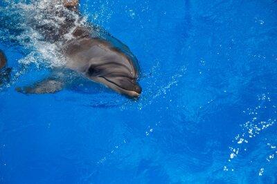 Fototapeta S úsměvem delfínů. delfíni plavat v bazénu