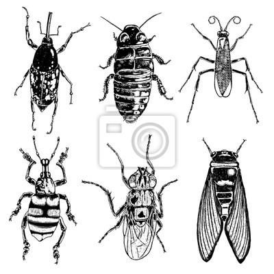 Sada Kresleni Hmyzu Izolovana Hmyz A Sber Hmyzu V Trendovych