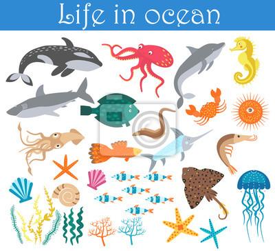 Sada Kresleny Morskych Zivocichu Ryby Zivot Ve Sbirce Oceanu