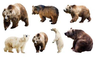 Fototapeta Sada mnoho medvědů. Izolované přes bílé