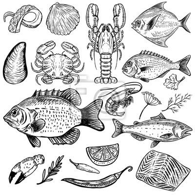 Sada Rucne Kreslenych Morskych Zivocichu Ilustrace Izolovanych