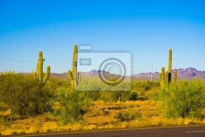 Fototapeta Saguaro kaktus v národním parku, Arizona