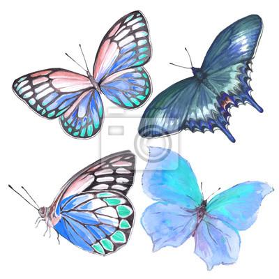 Sbirka Kreseb Rucne Vyrabeneho Motyla Z Akvarelu Fototapeta