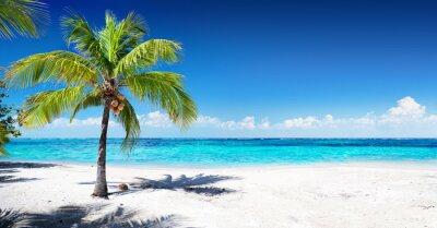 Fototapeta Scenic Coral Beach s palmou