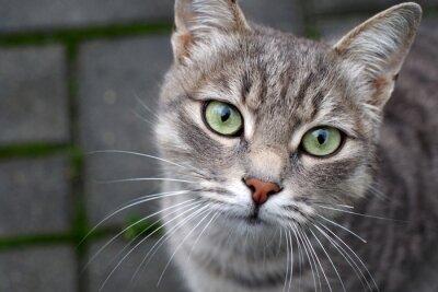 super super těsná kočička