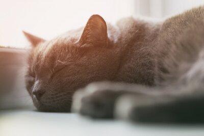 Fototapeta šedá kočka spí v okně, vinobraní tónovaný