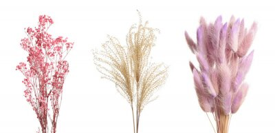 Fototapeta Set with beautiful decorative dry flowers on white background, banner design