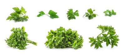 Fototapeta Set with green parsley on white background. Banner design
