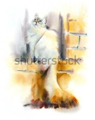 Fototapeta Siberian cat sits on the window. Watercolor hand drawn illustration