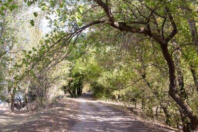 Fototapeta Silnice v lese