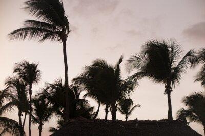 Fototapeta Silueta palmových stromů za krásného západu slunce