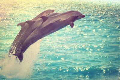 Fototapeta skákání delfínů