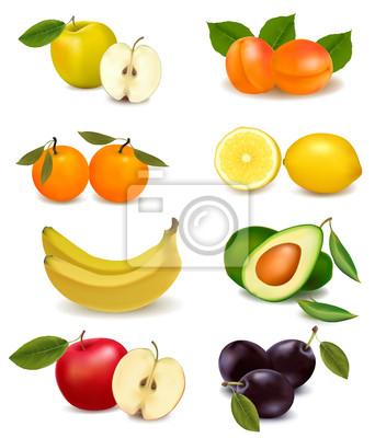 Skupina s různými druhy ovoce. vector. fototapeta • fototapety ... 142e8ba59d