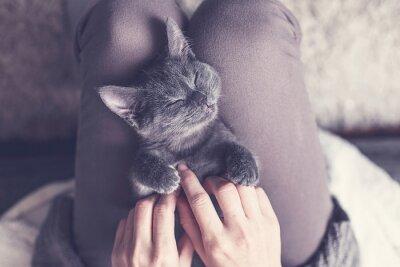 Fototapeta Sladká kočička zdřímnout