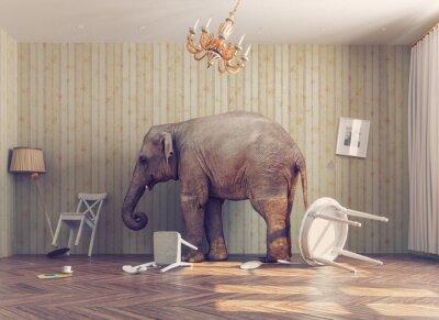 Fototapeta slon v pokoji