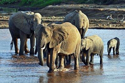 Fototapeta Slon v savaně