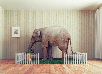Fototapeta Sloní mládě - pet