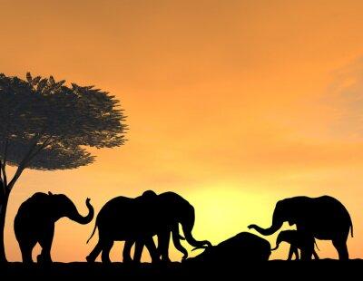 Fototapeta Sloni Morn jejich mrtvých při západu slunce, velmi jemné scény.