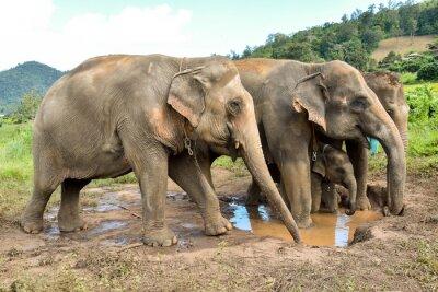 Fototapeta sloní stádo s slůněte při Billabong