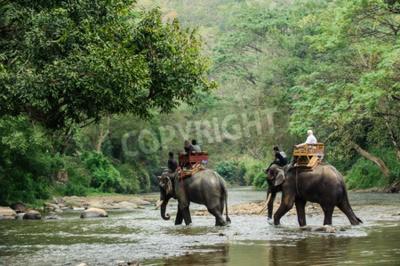 Fototapeta Sloní trekking přes džungle v severním Thajsku