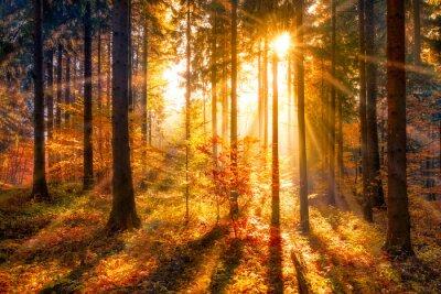 Fototapeta Sluncem zalité podzimního lesa