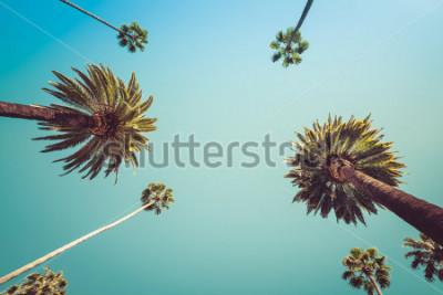 Fototapeta Splatit Los Angeles Vintge Palm Trees - jasné letní nebe