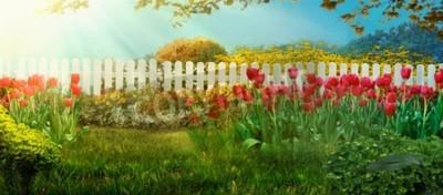 Fototapeta Spring garden. Red tulips in garden Spring grass with flowers