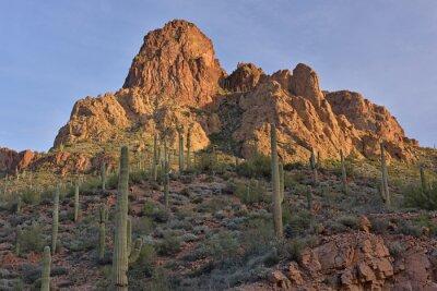 Fototapeta Spring landscape at sunrise along the Apache Trail, Tonto National Forest, Arizona, USA