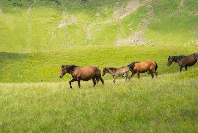 Fototapeta Stádo koní chůze podél horské louky