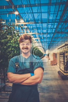 Fototapeta Šťastný muž na farmě rajčat
