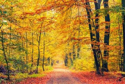 Fototapeta Stáž v podzimním lese
