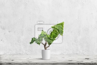 Fototapeta strom