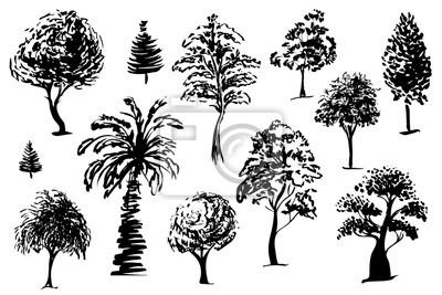 Stromy Izolovane Skicu Rychla Kresba Stromu V Cerne Na Bilem