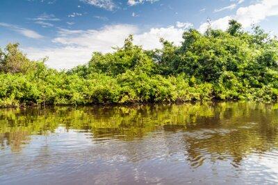 Fototapeta Stromy lemující řeku Yacuma v Bolívii