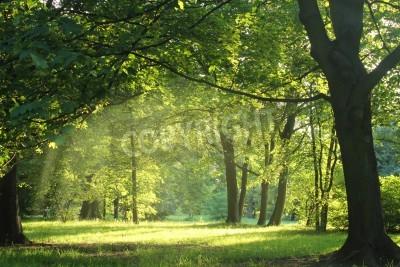 Fototapeta stromy v létě lese