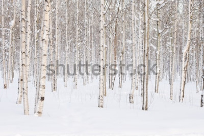 Fototapeta Stromy v parku nebo lesy v zimním sněhu