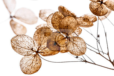 Fototapeta suché květiny zblízka v detailu izolovaných na bílém pozadí