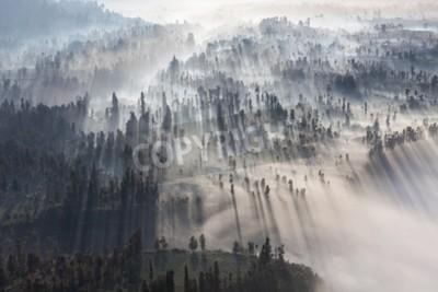 Fototapeta Sunrise v lese u Bromo sopky, ostrov Jáva, Indonésie