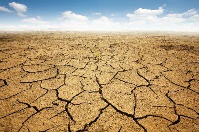 Fototapeta Sušené pozemek s popraskané země. Poušť