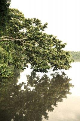 Fototapeta Tambopata Province Venku