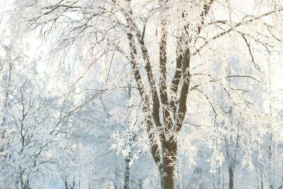 Fototapeta Tapety stromy se z mléčného větve stromu na zimní den
