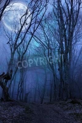 Fototapeta Temná noc lesní agaist úplňku